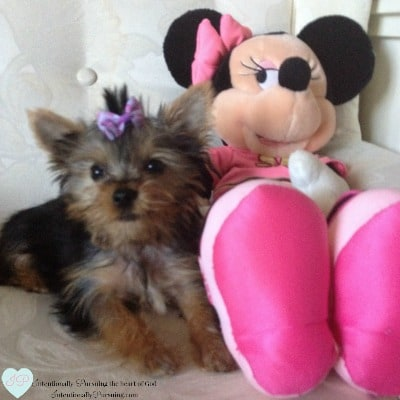 Minnie at 13 weeks - Intentional Tuesday Linkup {Week 18} - IntentionallyPursuing.com